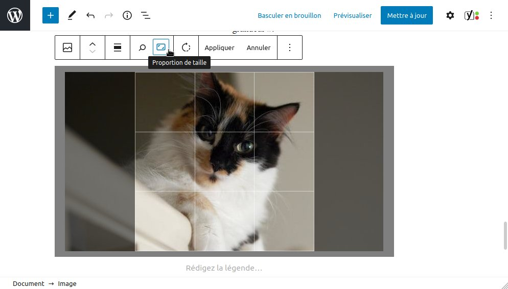 WordPress 5.5 : modification des images